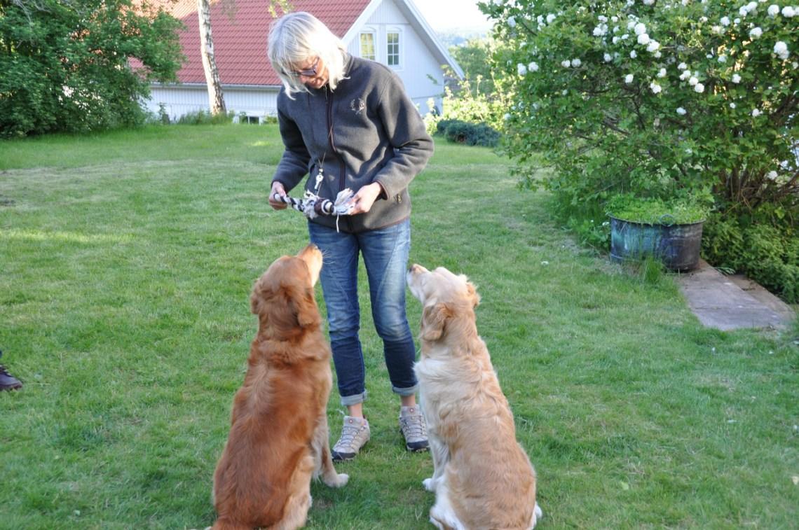 en kvinna med två hundar