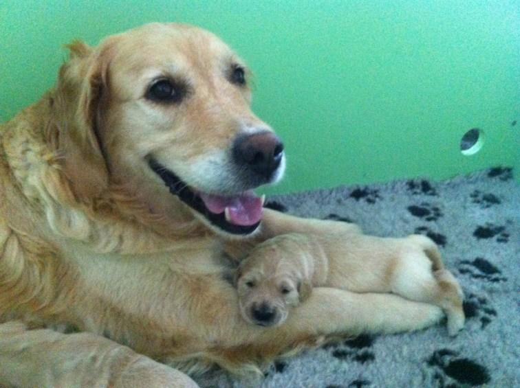 vilande hund med sin valp