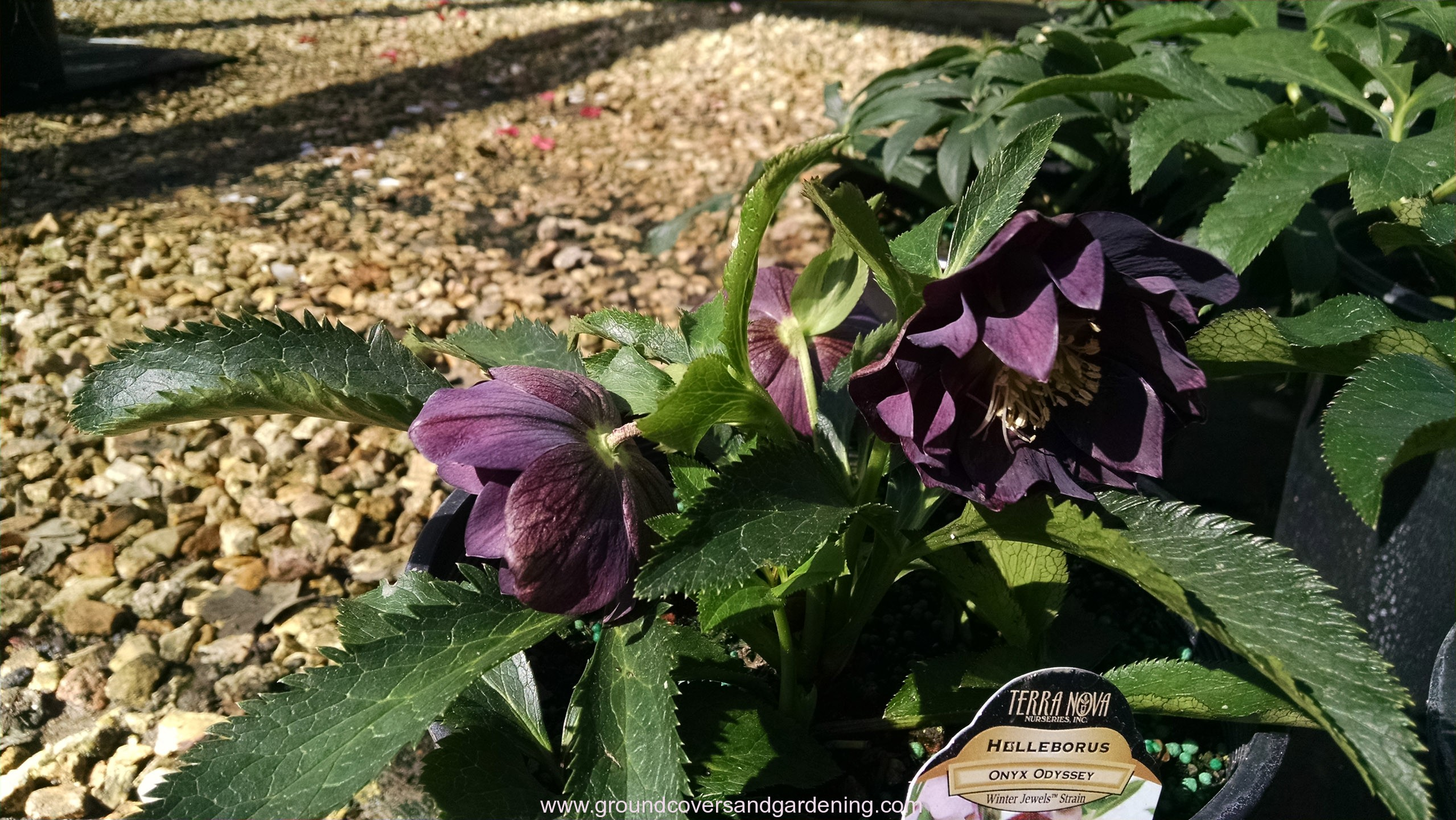 Perennial flowers that grow in shade mightylinksfo