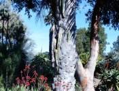 P1040089 175x133 Ruth Bancrofts Succulent Garden