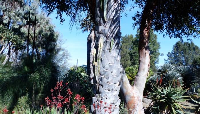 P1040089 700x400 Ruth Bancrofts Succulent Garden