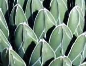 RBG Patterns 175x133 Ruth Bancrofts Succulent Garden