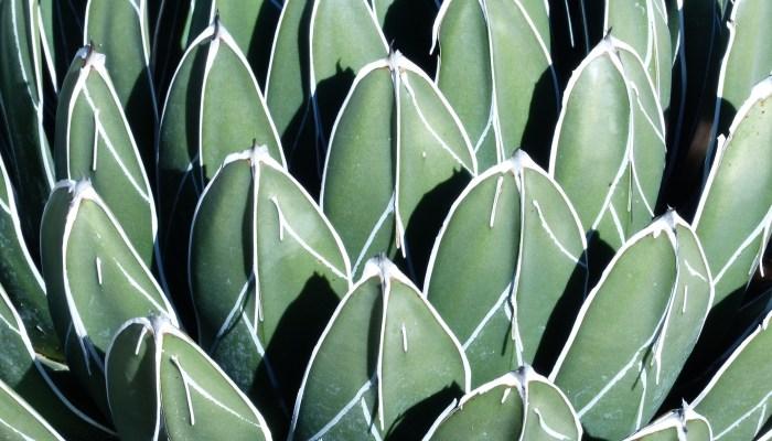RBG Patterns 700x400 Ruth Bancrofts Succulent Garden