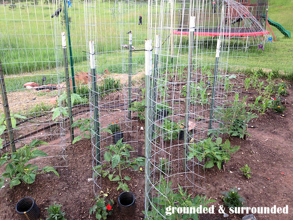 If you need something sturdy and cost effective to trellis your tomatoes, I highly recommend this method. We tried it last year with great success. Our plants were huge, and the trellis held them perfectly. We were able to get the stakes for free, and reuse some old fencing. https://www.groundedandsurrounded.com/frugal-diy-garden-articles/