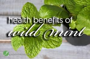 Health Benefits of Wild Mint