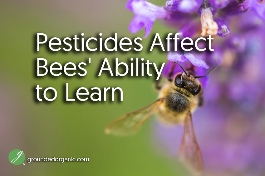 pesticides affect bees ability to learn