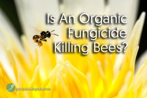 Is An Organic Fungicide Killing Bees?