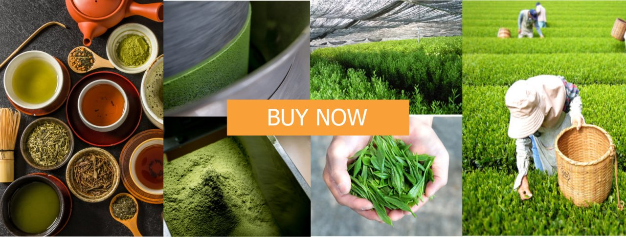 buy organic Japanese tea