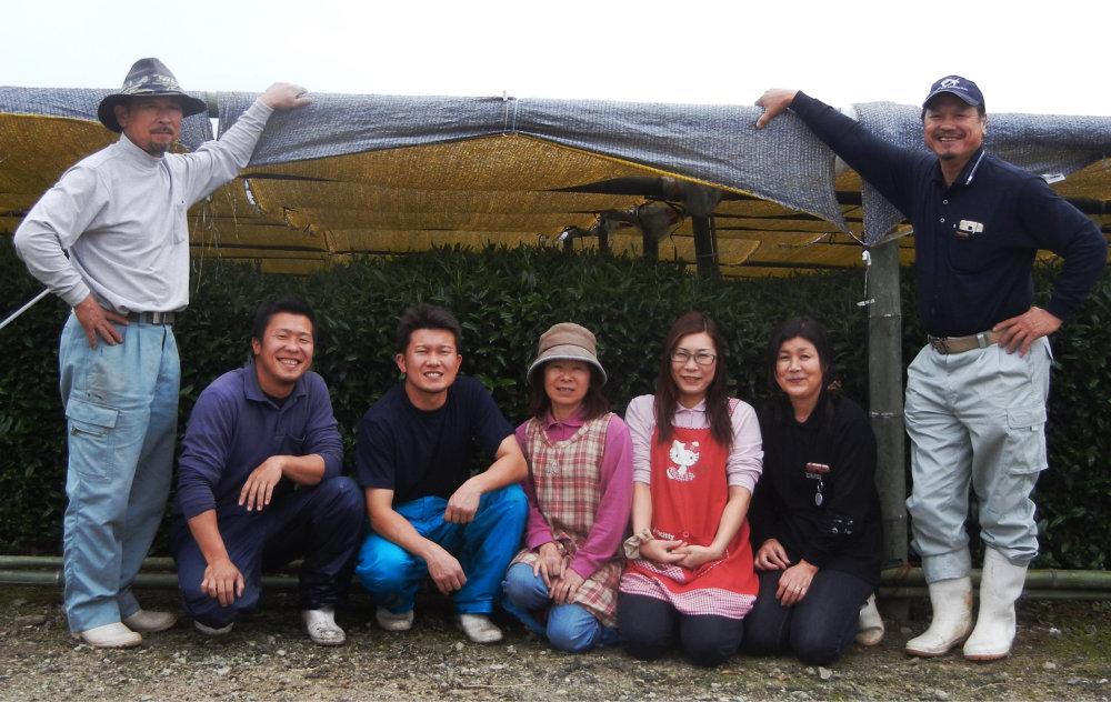 Sakamoto tea farm