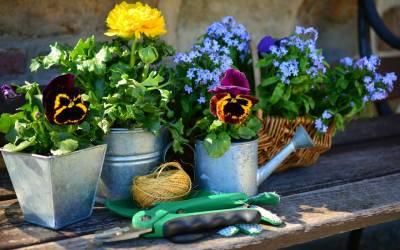 Icare Services à la Personne vous aide à mettre de la couleur à vos balcons et jardins