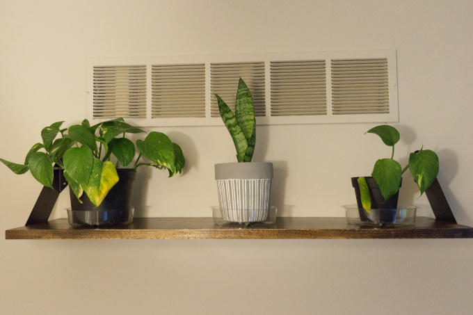 Modern Houseplant Shelf, Pothos Devil's Ivy, Sanseveria Snake Plant