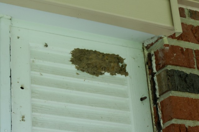 Close up of wasp nest under porch shutter