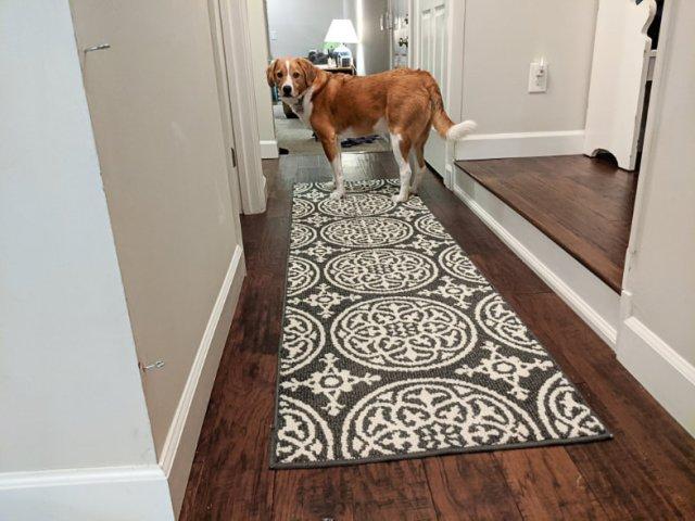 Washable Target runner rug, navy medallion pattern