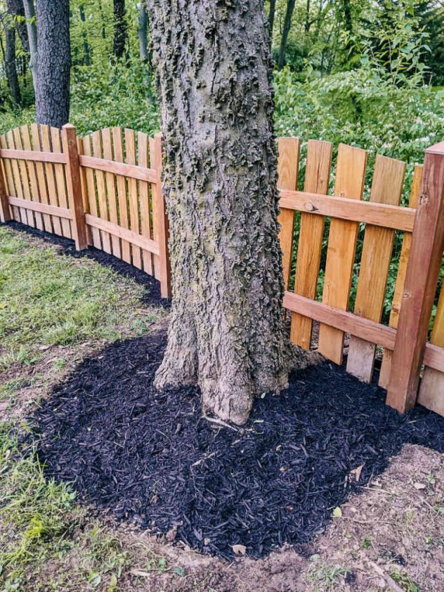 Mulching under our fence line, mulch around base of tree