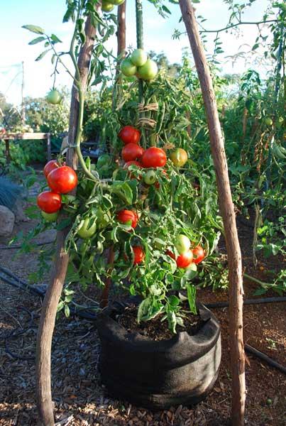 Terra Cotta Planter Box