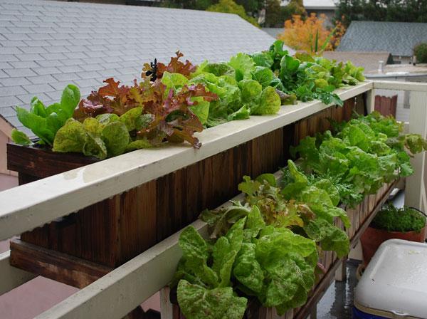 Vegetable Growing Window Box