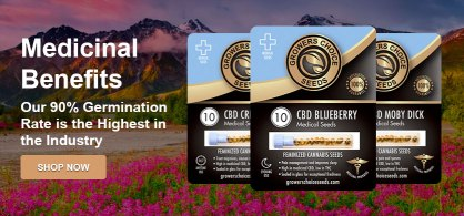 Cannabis Seeds Delivery Areas – Buy Cannabis Seeds For Sale ...