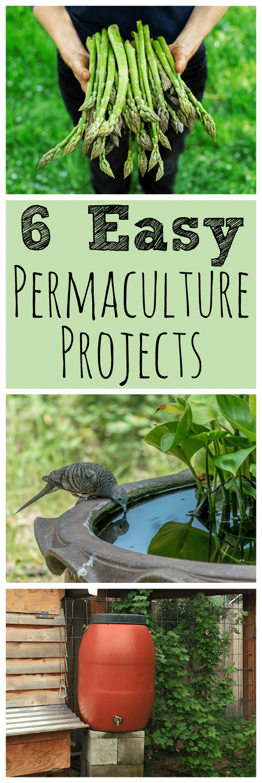 6 Easy Backyard Permaculture Projects for Beginners on Backyard Permaculture Design id=50227