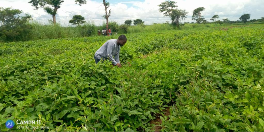 man picking crops in agricultural field