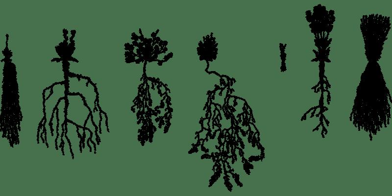plants-6088465_1280