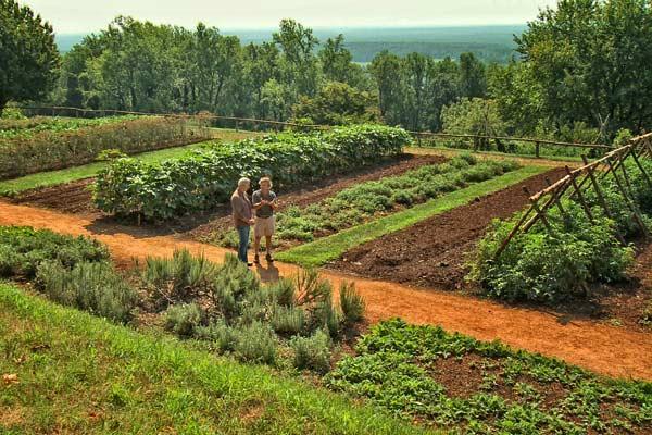 Acre Vegetable Layout 1 Garden