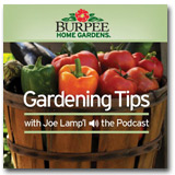 Burpee Home Gardens Podcast with Joe Lamp'l