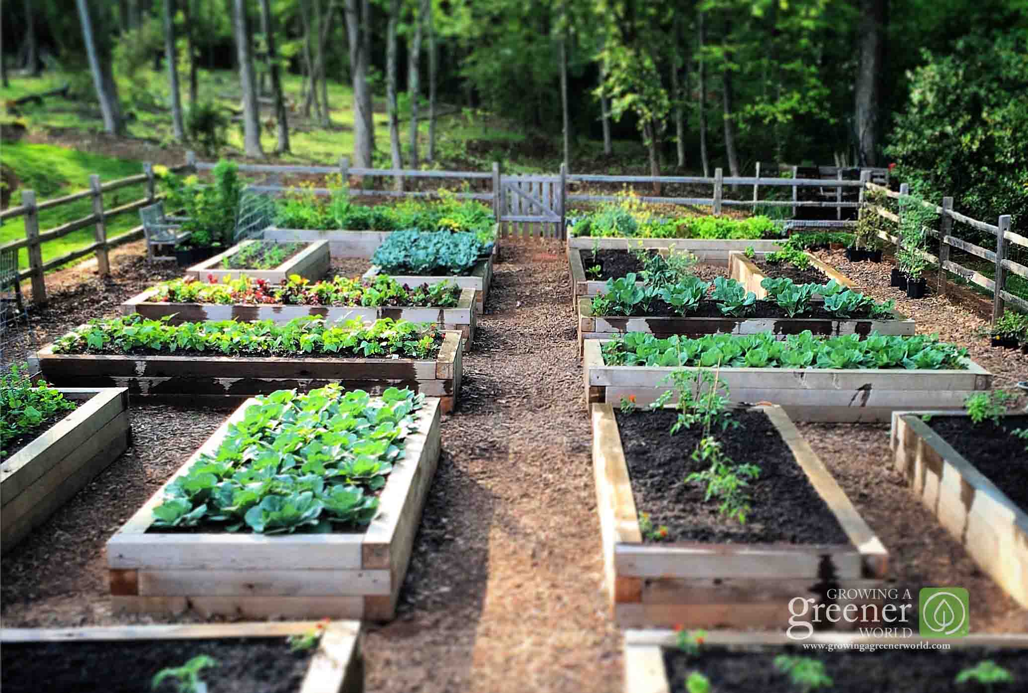 Three Key Benefits Of Gardening In Raised Beds