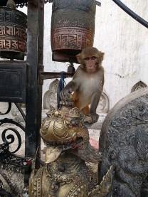 Monkey temple monkey