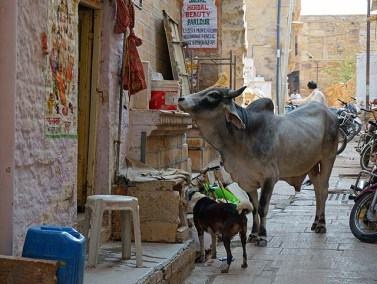 the streets of Jaisalmer fort