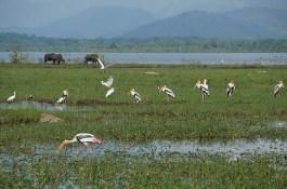 Painted stalks in the wetlands