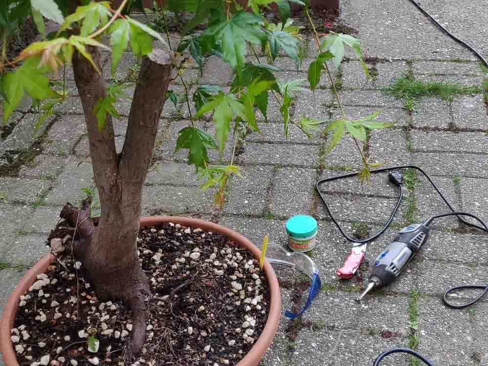 Removing side branches