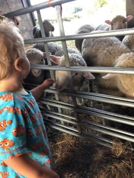 baby bear and sheep