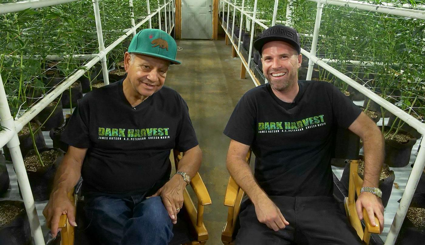 James Hutson, Cheech Marin, Dark Harvest, Cannabis