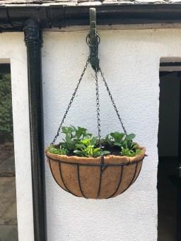 hanging baskets of lobelio and pertunias