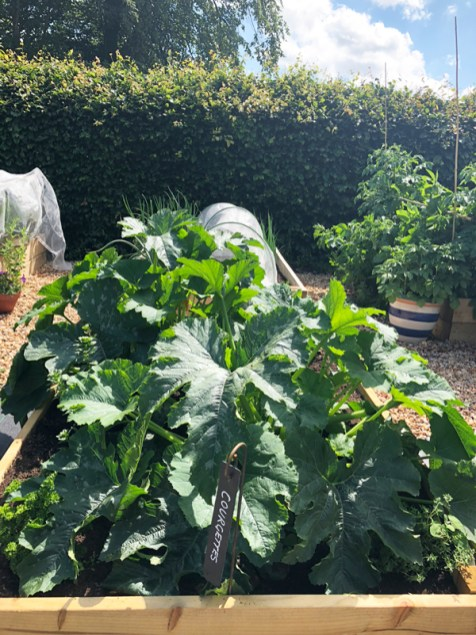 courgette-large