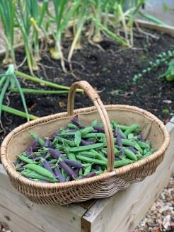 mixed-pea-harvest