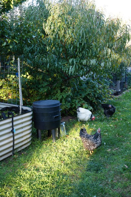 Urban Homesteading | Dirt to Dinner | Growing Home