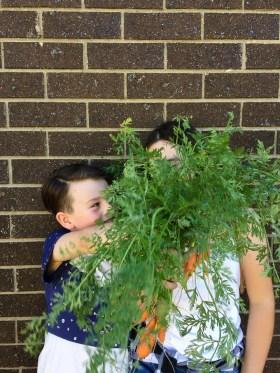 Edible Gardening   Dirt to Dinner   Growing Home