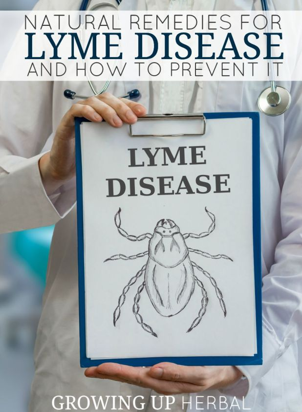Natural Remedies For Lyme Disease and How To Prevent It | Growing Up Herbal | Concerned about ticks and Lyme disease? Here are some natural remedies and prevention tips to keep your little ones safe this summer.