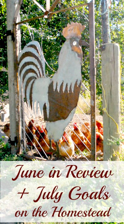 What are we up to on the homestead now? Here is June in review and July goals. | www.growingwildroots.com