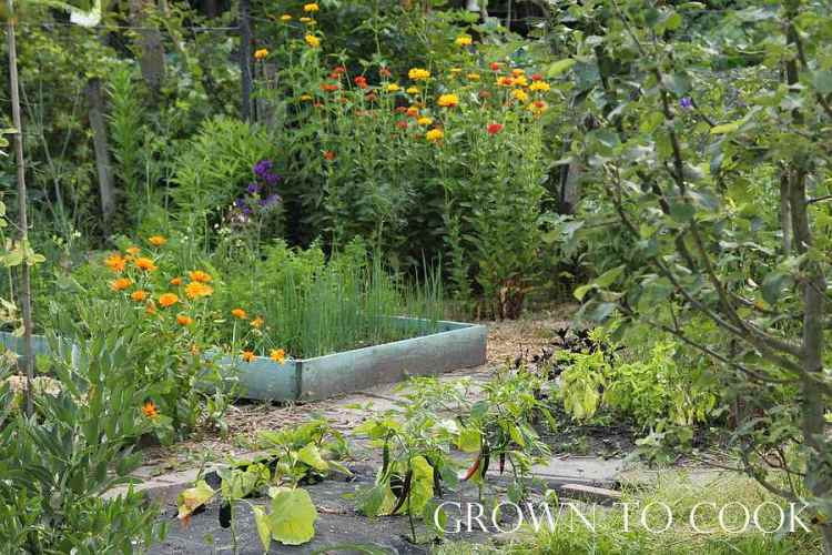 Allotment in july
