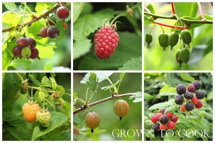 fruits from edible forest garden