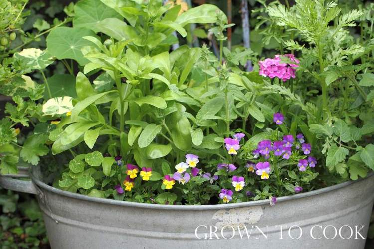 edible flowers growing in a container