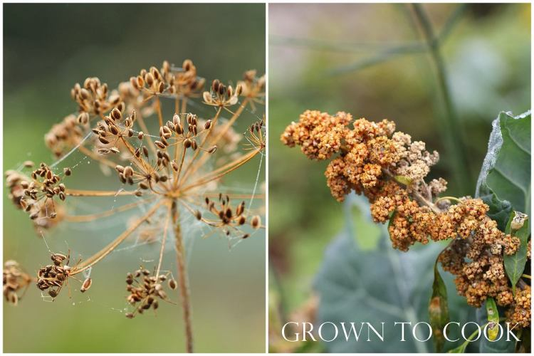 dill seed and quinoa