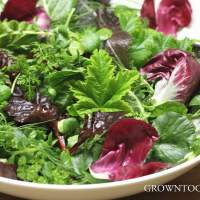 Winter salads from the garden