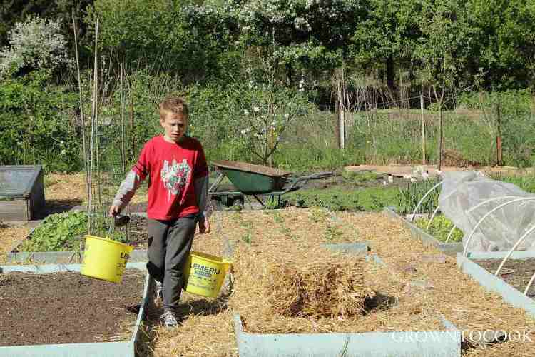 mulching with straw