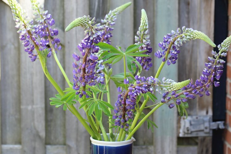 seasonal bouquet - Lupines
