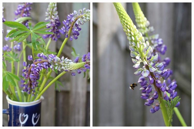 Seasonal bouquet - lupines