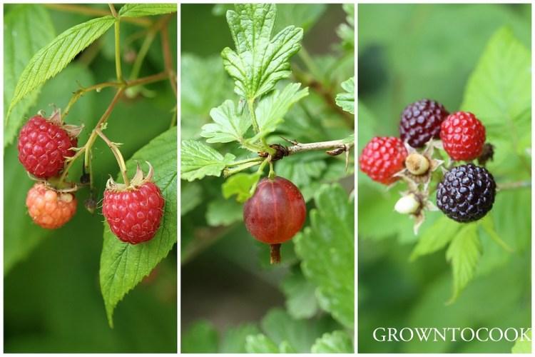 berries in june