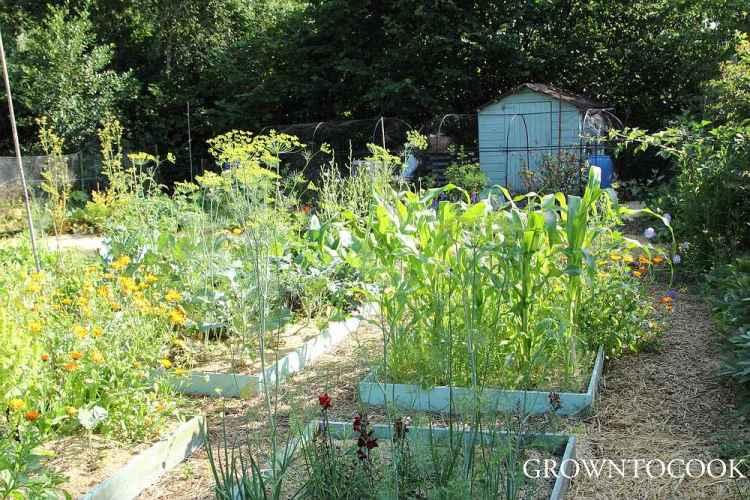 garden jobs in july